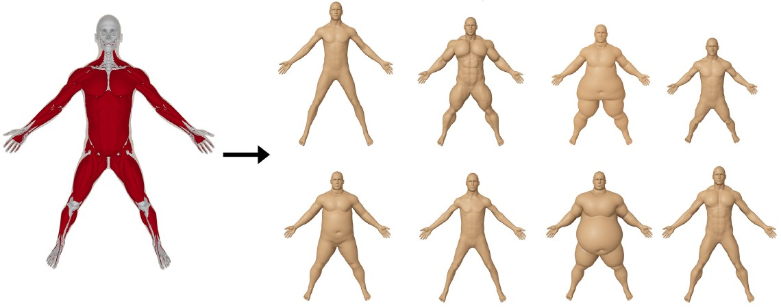 computational bodybuilding: anatomically-based modeling of human, Muscles